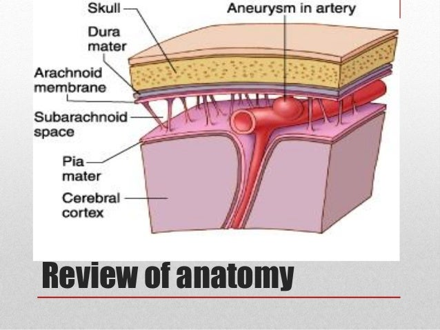 anatomy term 2 review 13 Human anatomy and physiology  but the term list at the end of each chapter is another good source for definitions  july 13-15 intro nervous system.