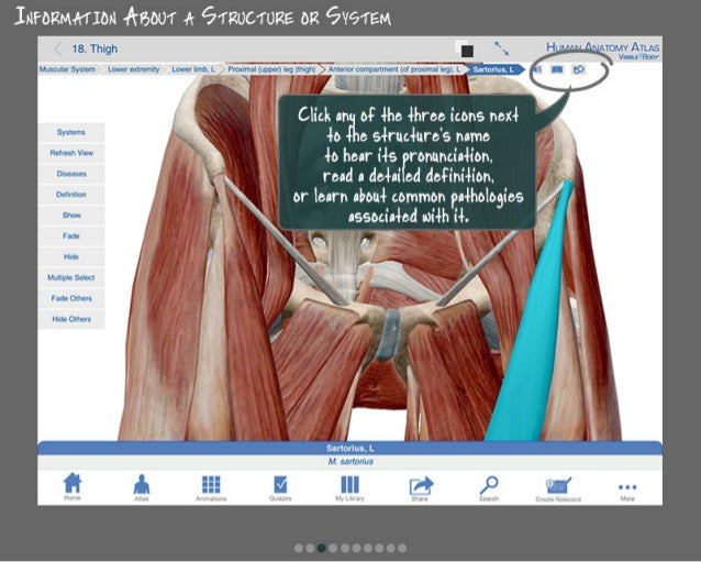 How To Use Human Anatomy Atlas 6 For Pc Or Mac