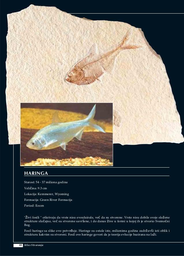imenovati dva glavna načina datiranja fosila nedostaci metoda upoznavanja