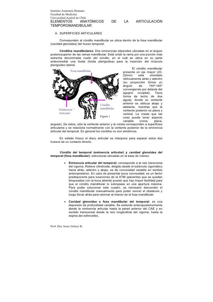 Instituto Anatomía HumanaFacultad de MedicinaUniversidad Austral de ChileELEMENTOS   ANATÓMICOS                         DE...
