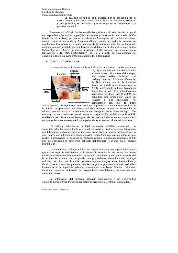 Instituto Anatomía HumanaFacultad de MedicinaUniversidad Austral de Chile                      La cavidad glenoidea está d...