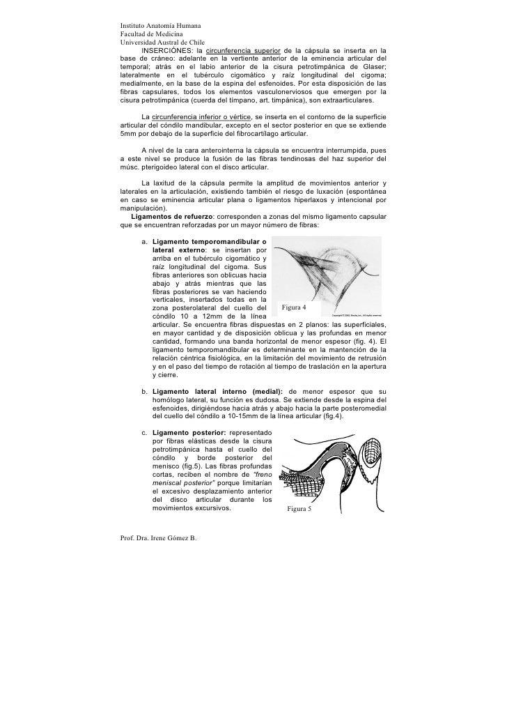 Instituto Anatomía HumanaFacultad de MedicinaUniversidad Austral de Chile        INSERCIÓNES: la circunferencia superior d...