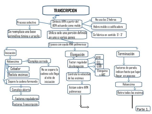 Replicacion transcripcion y traduccion del adn