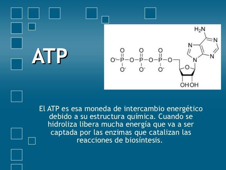 ATP El ATP es esa moneda de intercambio energético debido a su estructura química. Cuando se hidroliza libera mucha energí...