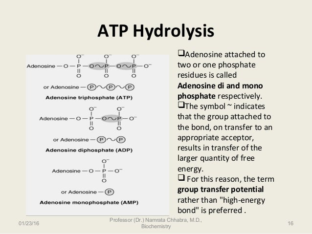 ATP- The universal energy currency of cell