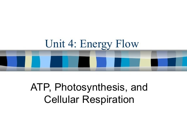 Unit 4: Energy Flow  ATP, Photosynthesis, and Cellular Respiration