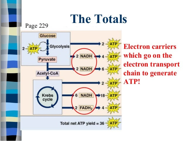Is atp produced in photosynthesis chemical synthesis of levodopa