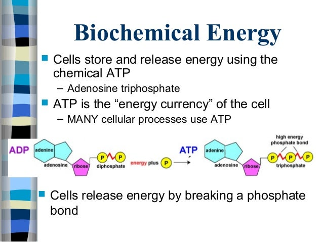 ATP, Photosynthesis, and Cellular Respiration