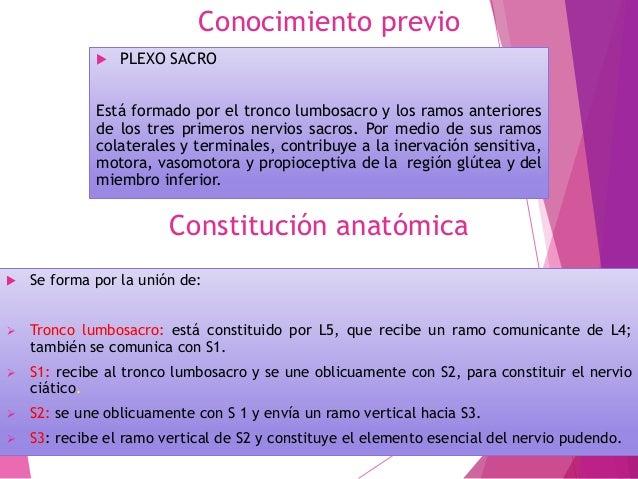 Conocimiento previo  PLEXO SACRO Está formado por el tronco lumbosacro y los ramos anteriores de los tres primeros nervio...