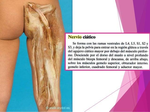Disfunción del nervio ciático La disfunción del nervio ciático es una condición que implica movimiento y/o sensibilidad de...
