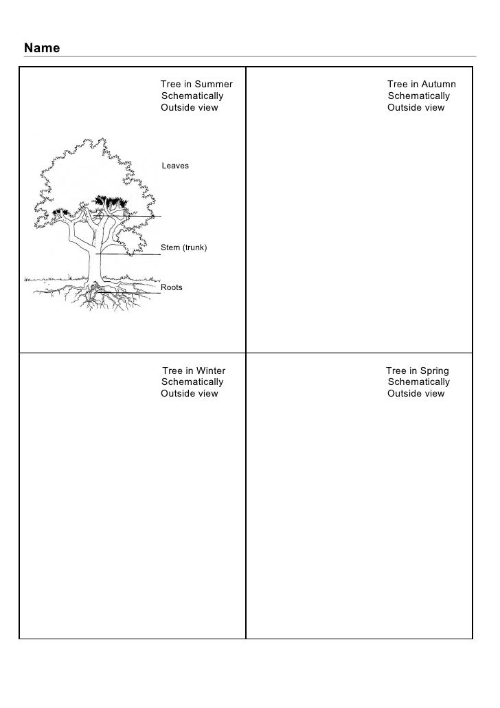 Name       Tree in Summer   Tree in Autumn       Schematically    Schematically       Outside view     Outside view       ...
