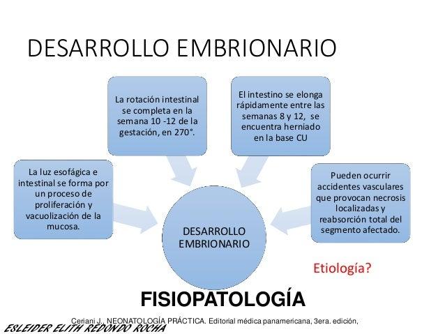 DESARROLLO EMBRIONARIO DESARROLLO EMBRIONARIO El intestino se elonga rápidamente entre las semanas 8 y 12, se encuentra he...