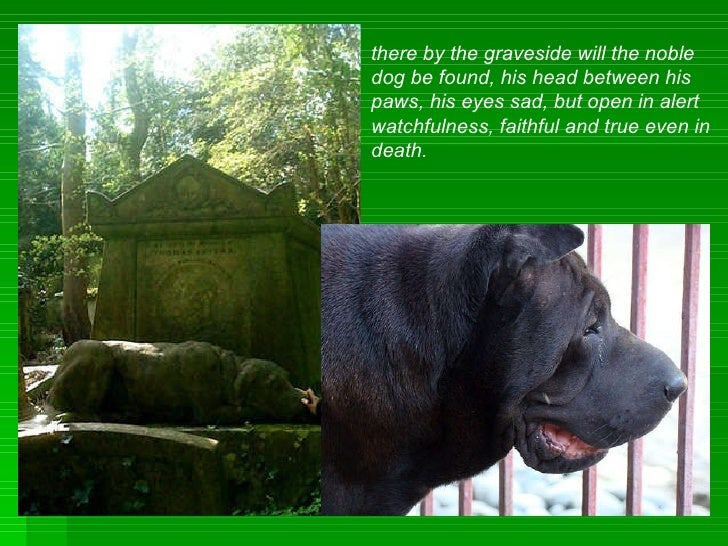there by the graveside will the noble dog be found, his head between his paws, his eyes sad, but open in alert  watchfulne...