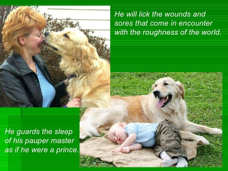 He will lick the wounds and  sores that come in encounter  with the roughness of the world. He guards the sleep  of his pa...