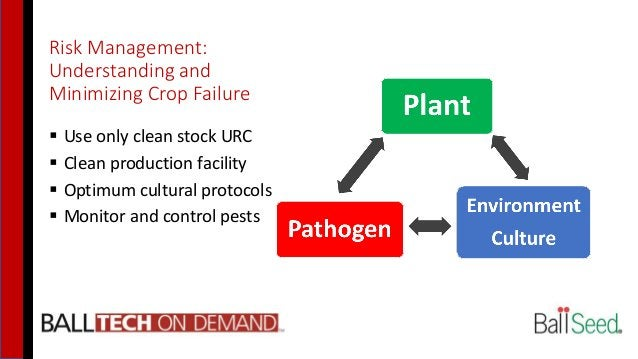 Risk Management: Understanding and Minimizing Crop Failure  Use only clean stock URC  Clean production facility  Optimu...