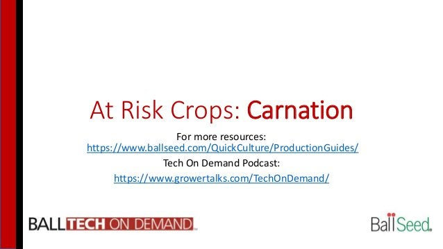 At Risk Crops: Carnation For more resources: https://www.ballseed.com/QuickCulture/ProductionGuides/ Tech On Demand Podcas...