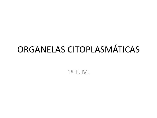 ORGANELAS CITOPLASMÁTICAS          1º E. M.