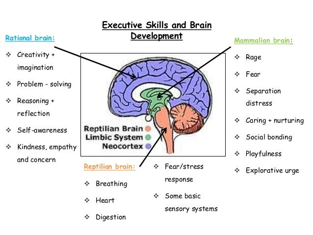 brain development and trauma in relationship to attachment