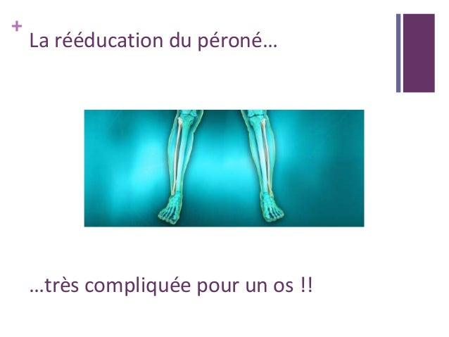 + La rééducation du péroné… …très compliquée pour un os !!