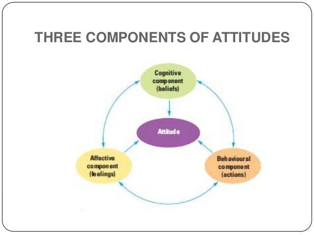 Tri component attitude model