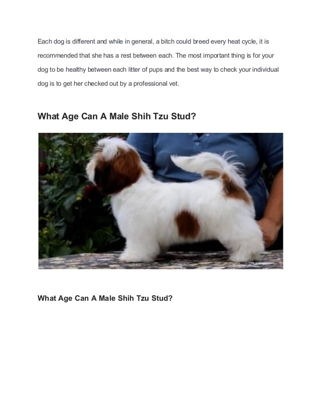 At What Age Can You Breed A Shih Tzu