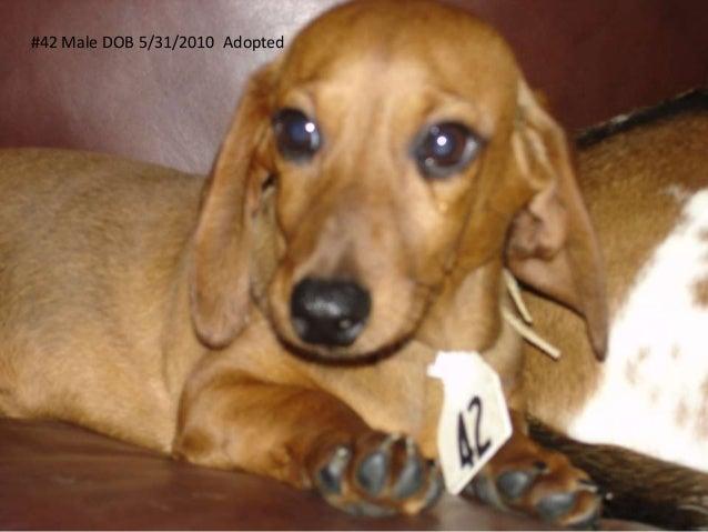 #42 Male DOB 5/31/2010 Adopted