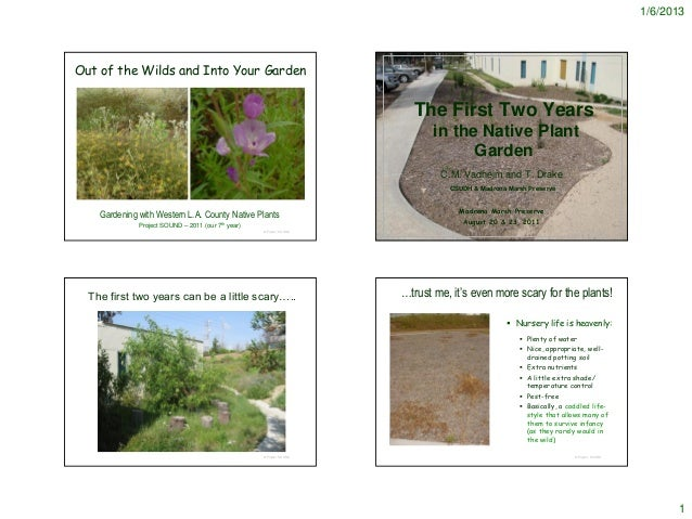 1/6/2013Out of the Wilds and Into Your Garden                                                                            T...