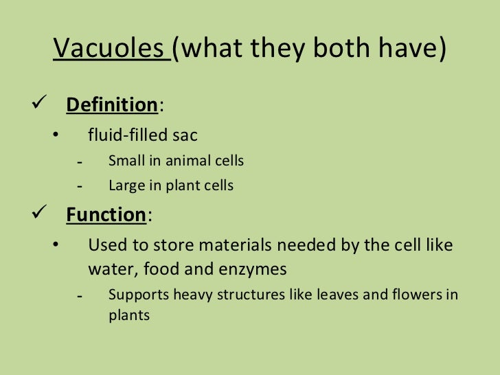 Aug 24 plant vs animal cells for Versus definition