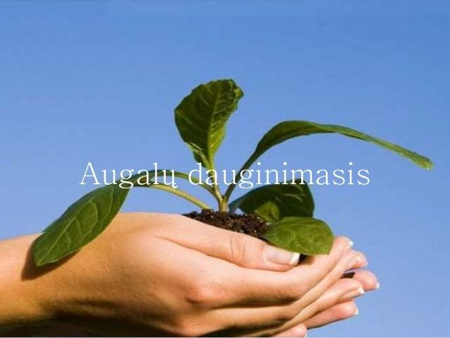 Augalų dauginimasis
