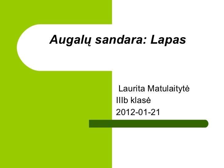Augal ų sandara: Lapas Laurita Matulaitytė IIIb klasė 2012-01-21
