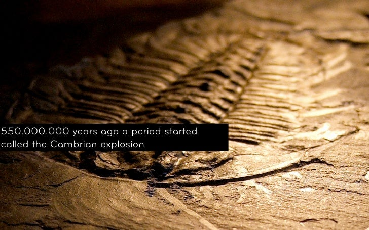 550.000.000 years ago a period startedcalled the Cambrian explosion© 2011, Layar Confidential and Proprietory
