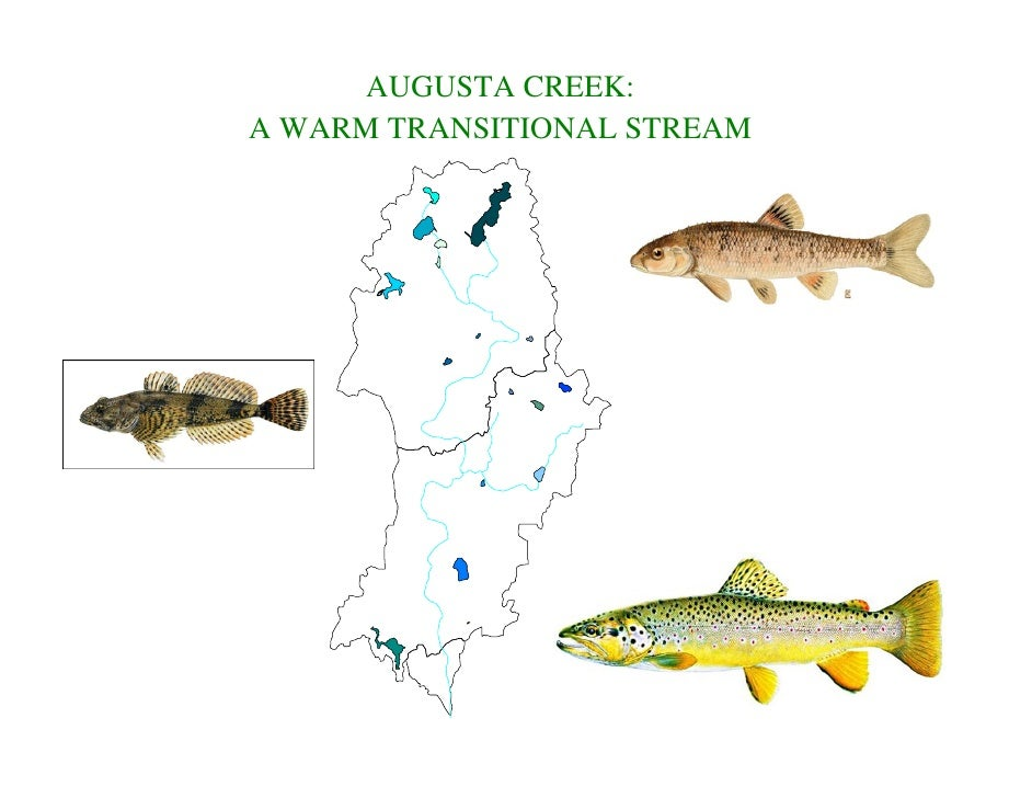 AUGUSTA CREEK:A WARM TRANSITIONAL STREAM