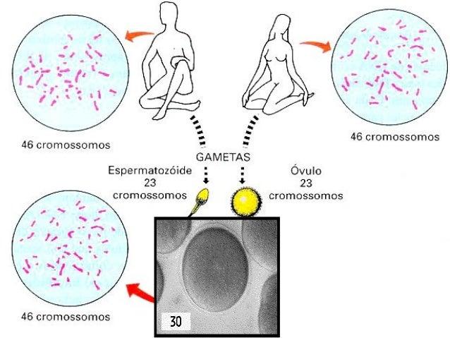 Fases da reprodução sexuada humana  Há dois tipos de  divisão celular, com  diferentes  finalidades:  Meiose  Para  formar...