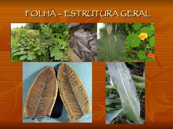 FOLHA - ESTRUTURA GERAL