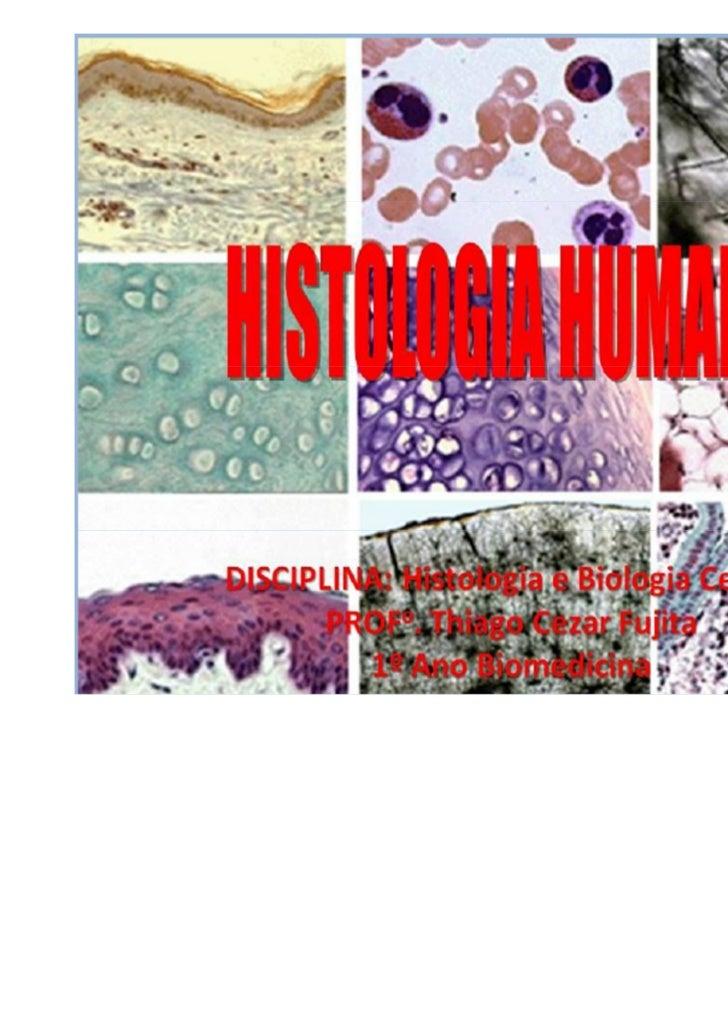 """Tecido Epitelial""""O tecido epitelial caracteriza-se como umregimento de células que atuam de forma conjunta nas diferentes ..."""