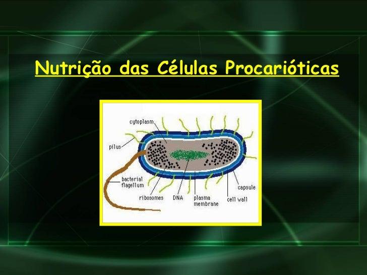 Nutrição das Células Procarióticas