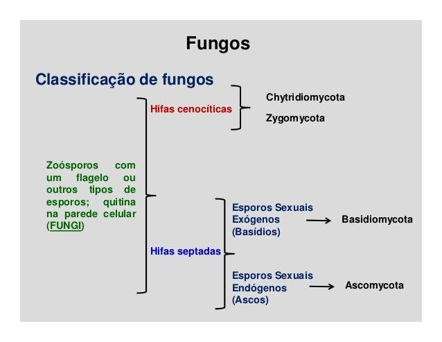 Hifa basidiomycota asexual reproduction