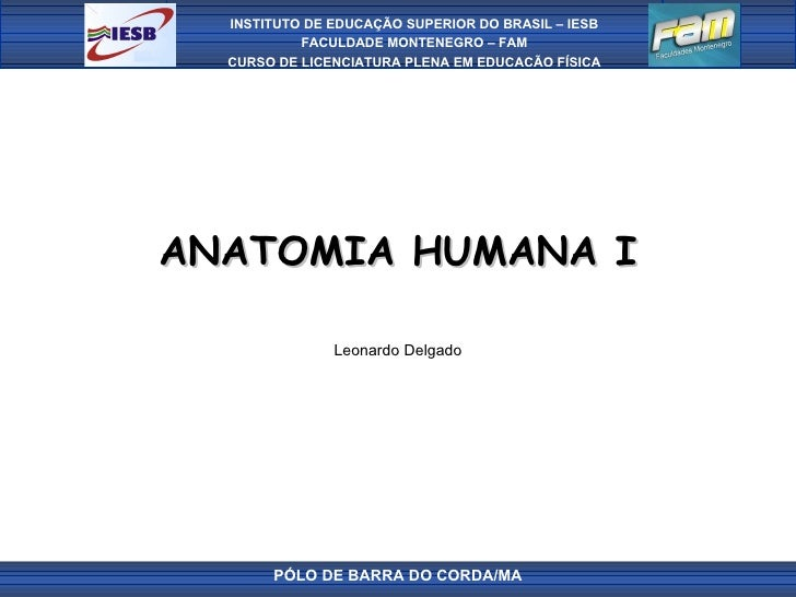 ANATOMIA HUMANA I Leonardo Delgado PÓLO DE BARRA DO CORDA/MA