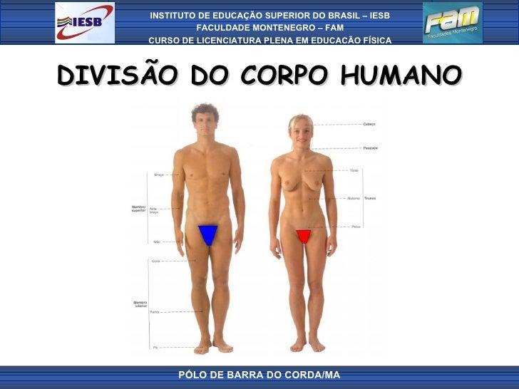 DIVISÃO DO CORPO HUMANO PÓLO DE BARRA DO CORDA/MA