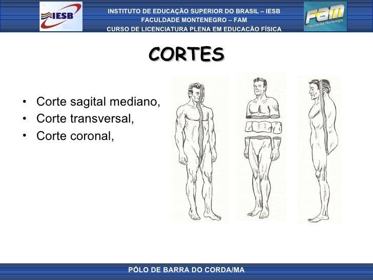 CORTES <ul><li>Corte sagital mediano,  </li></ul><ul><li>Corte transversal,  </li></ul><ul><li>Corte coronal,  </li></ul>...