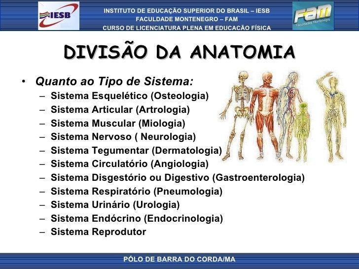 DIVISÃO DA ANATOMIA <ul><li>Quanto ao Tipo de Sistema: </li></ul><ul><ul><li>Sistema Esquelético (Osteologia) </li></ul></...