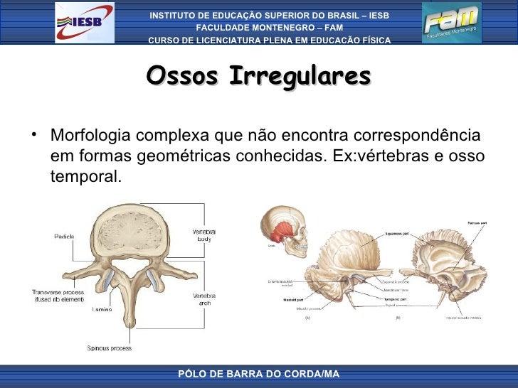 Aula02 osteologia for Esterno e um osso irregular