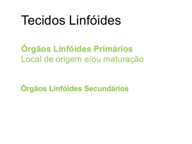 Tecidos Linfóides Órgãos Linfóides Primários Local de origem e/ou maturação  Medula óssea  Timo  Fígado Fetal Órgãos Li...