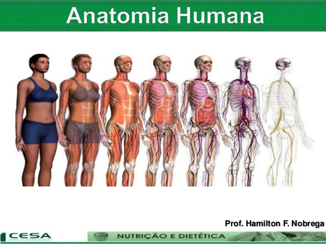 Prof. Hamilton F. Nobrega
