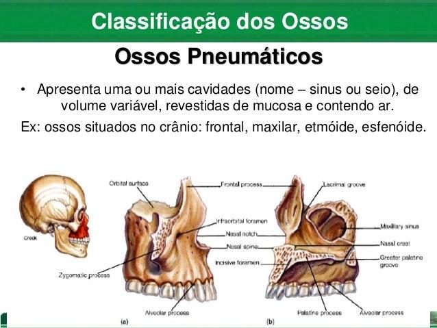 Aula 04 Anatomia E Fisiologia Do Sistema ósseo E Articular