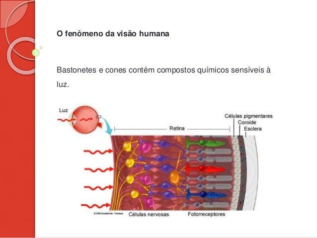 O fenômeno da visão humana Bastonetes e cones contém compostos químicos sensíveis à luz.