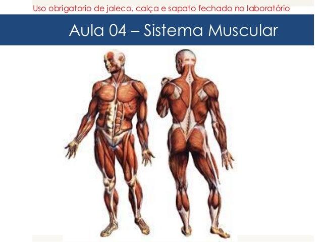 Aula 04 – Sistema Muscular Uso obrigatorio de jaleco, calça e sapato fechado no laboratório