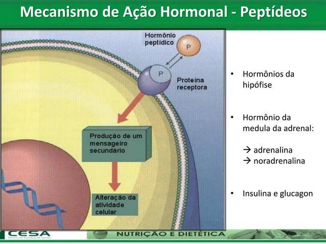 • Hormônios da hipófise • Hormônio da medula da adrenal:  adrenalina  noradrenalina • Insulina e glucagon Mecanismo de A...