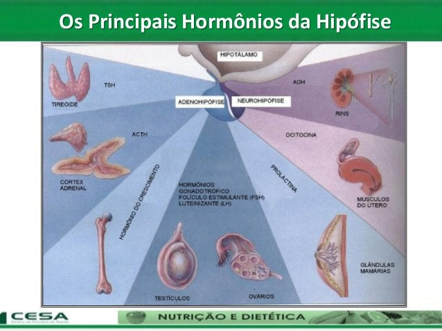 Os Principais Hormônios da Hipófise