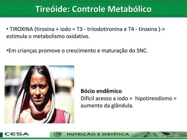 • TIROXINA (tirosina + iodo = T3 - triiodotironina e T4 - tiroxina )-> estimula o metabolismo oxidativo. •Em crianças prom...